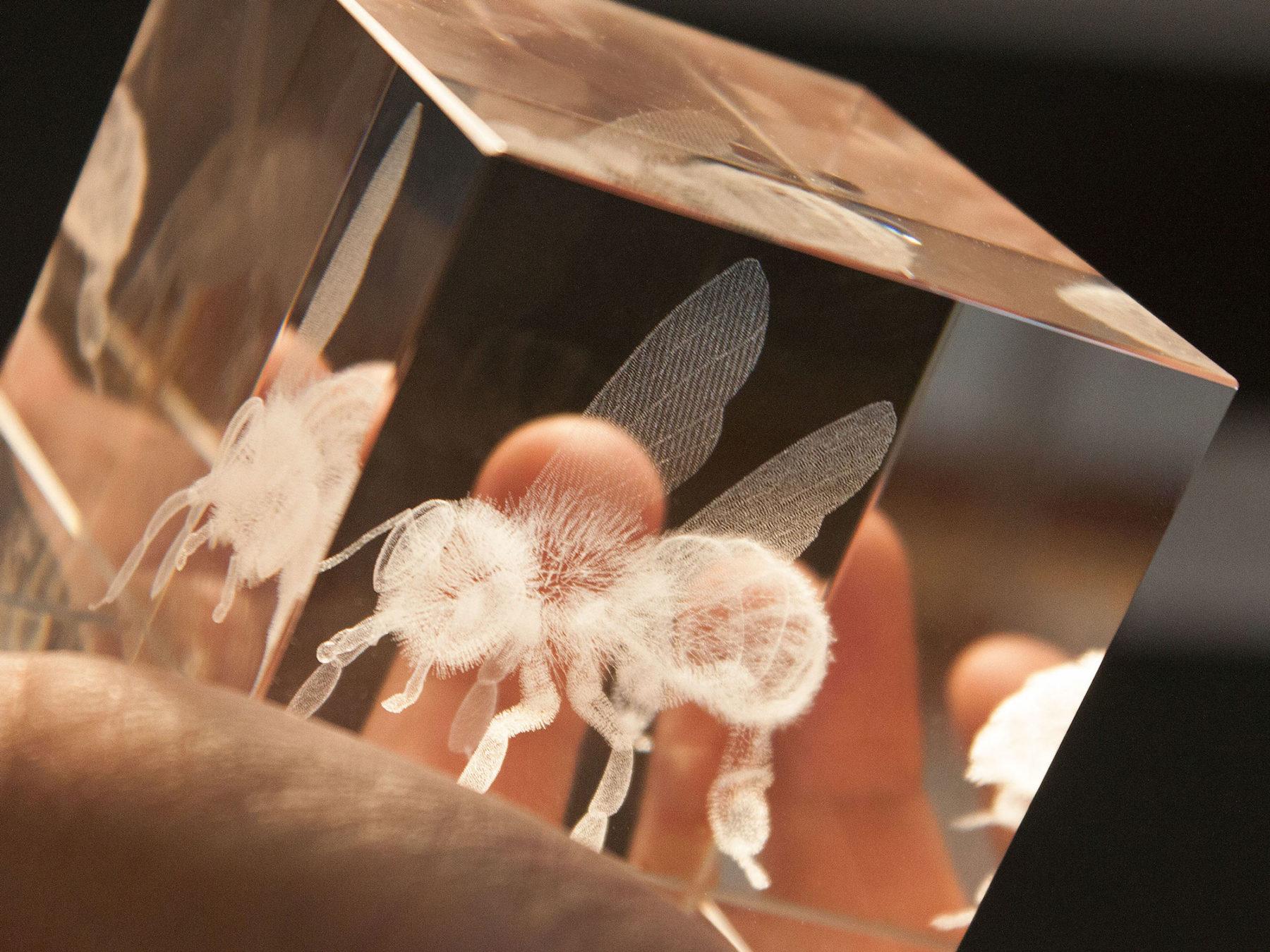 Biene im Glas 3D Glasquader Biene Glas Deko KURTS.ch